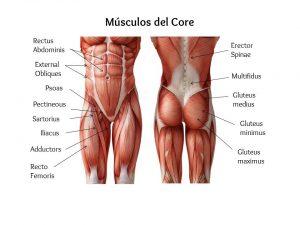 Los músculos que componen el core