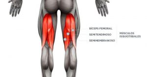 Prevención de lesiones en los isquiotibiales musculos