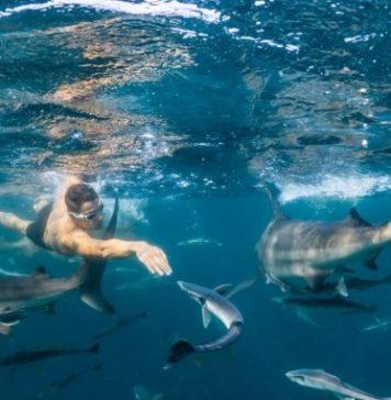 100 kms a nado más rápidos es el récord Guinness de Pablo Fernández