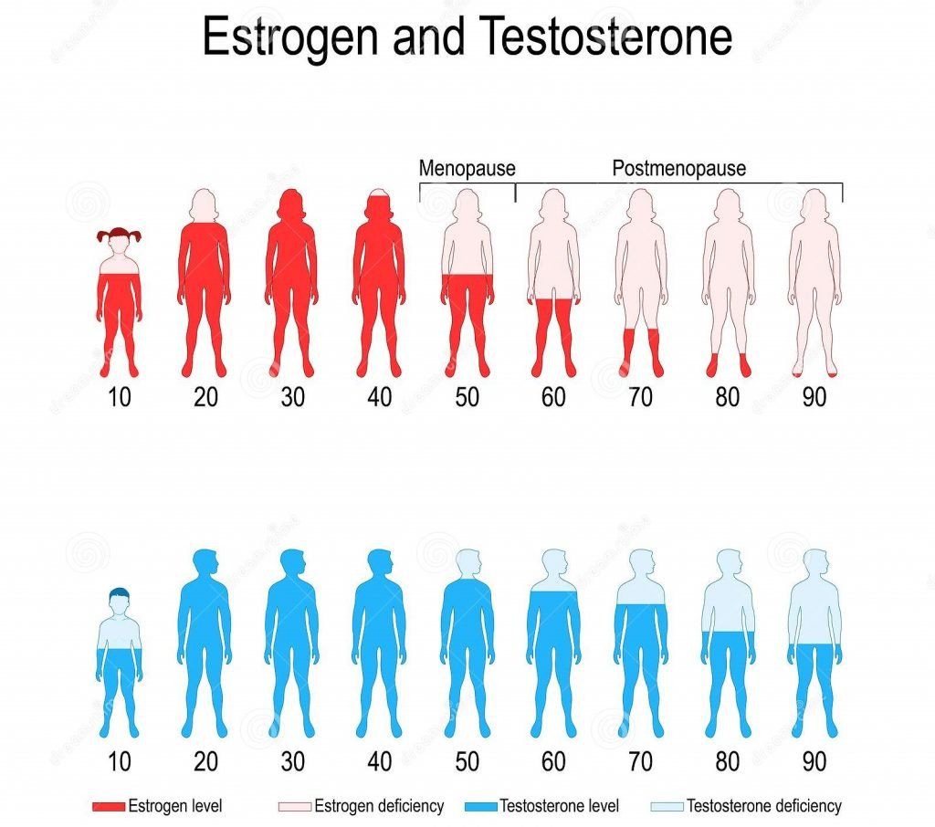 Niveles de estrógeno y testosterona
